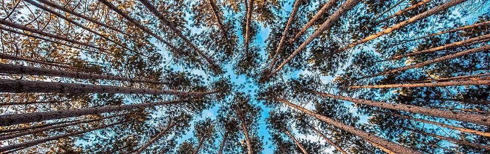 Nichts wächst bis in den Himmel