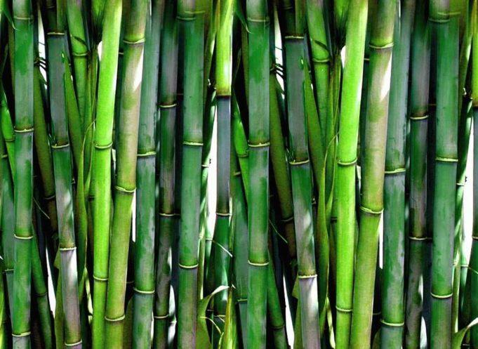 bambus parkett