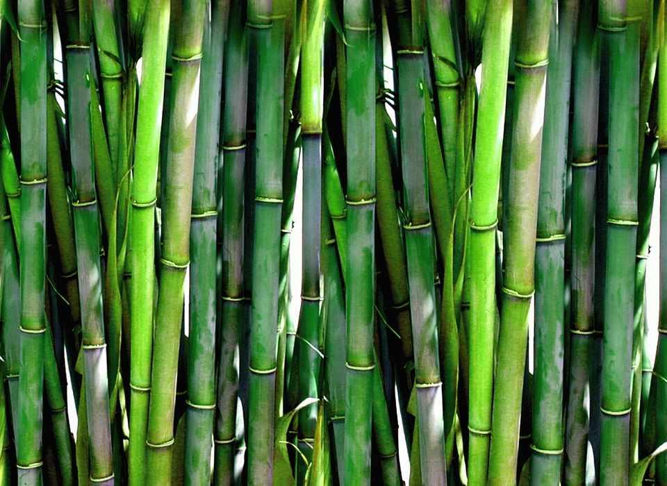 Nachhaltigkeit und Umweltbewusstsein: nur einige Vorteile beim Bambusparkett