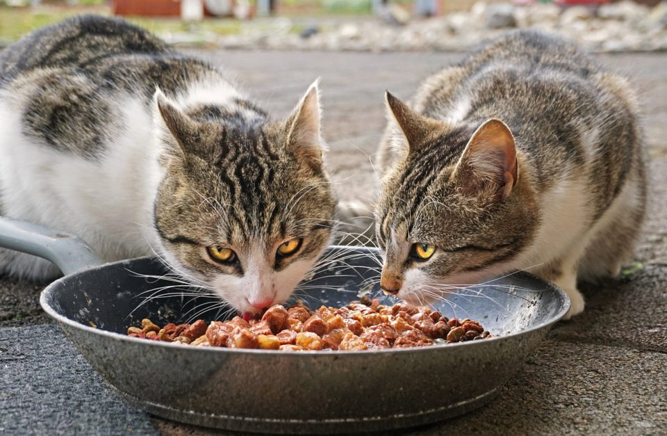 Ratgeber Katzenfutter