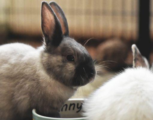 Kaninchen als Haustier für Kinder?