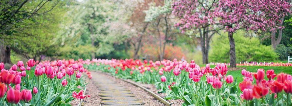 Der Garten im Frühling