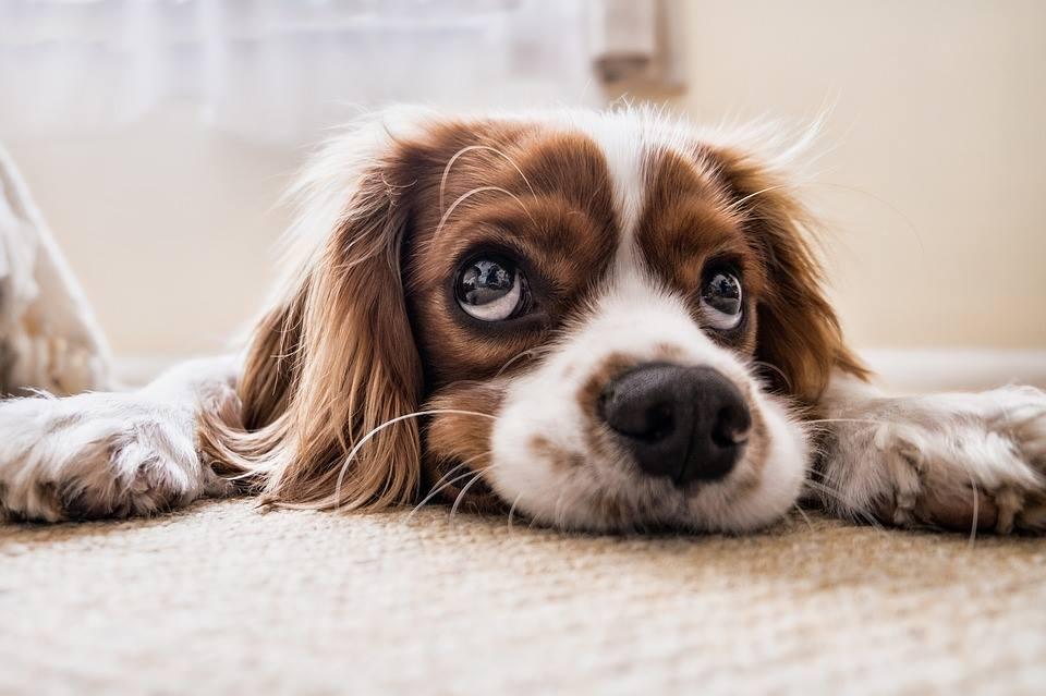 Die Krankenversicherung für den Hund