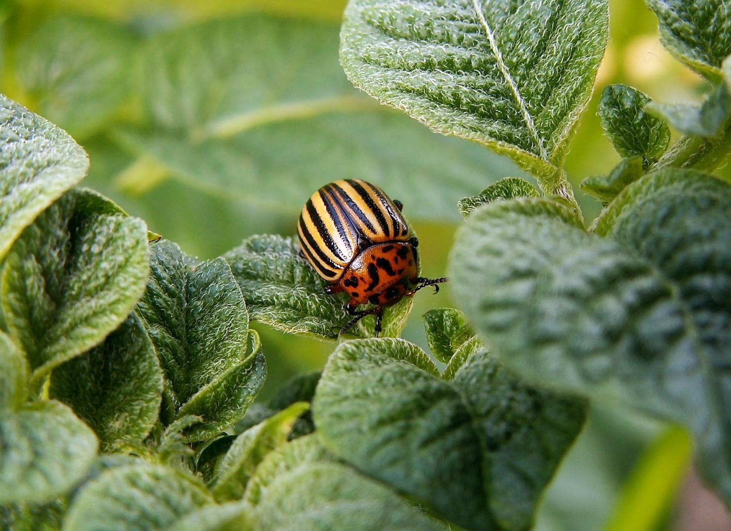 Tipps im Kampf gegen Schädlinge