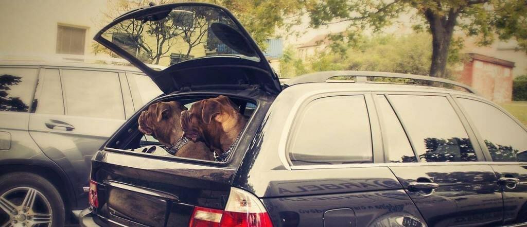 Produkttest: Hundetransportboxen