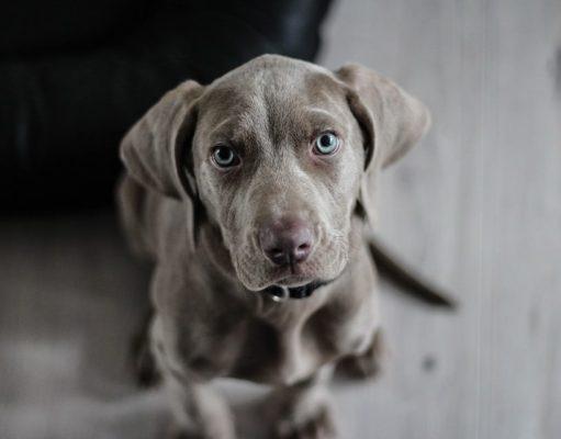 versicherung fuer hunde