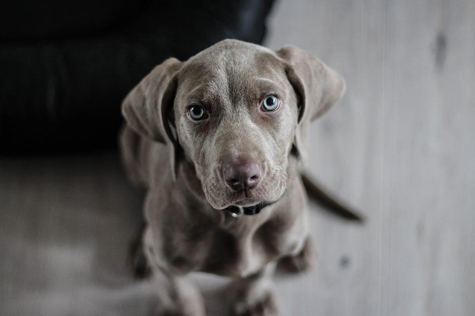 Hundehaftpflichtversicherungen vergleichen und online abschließen